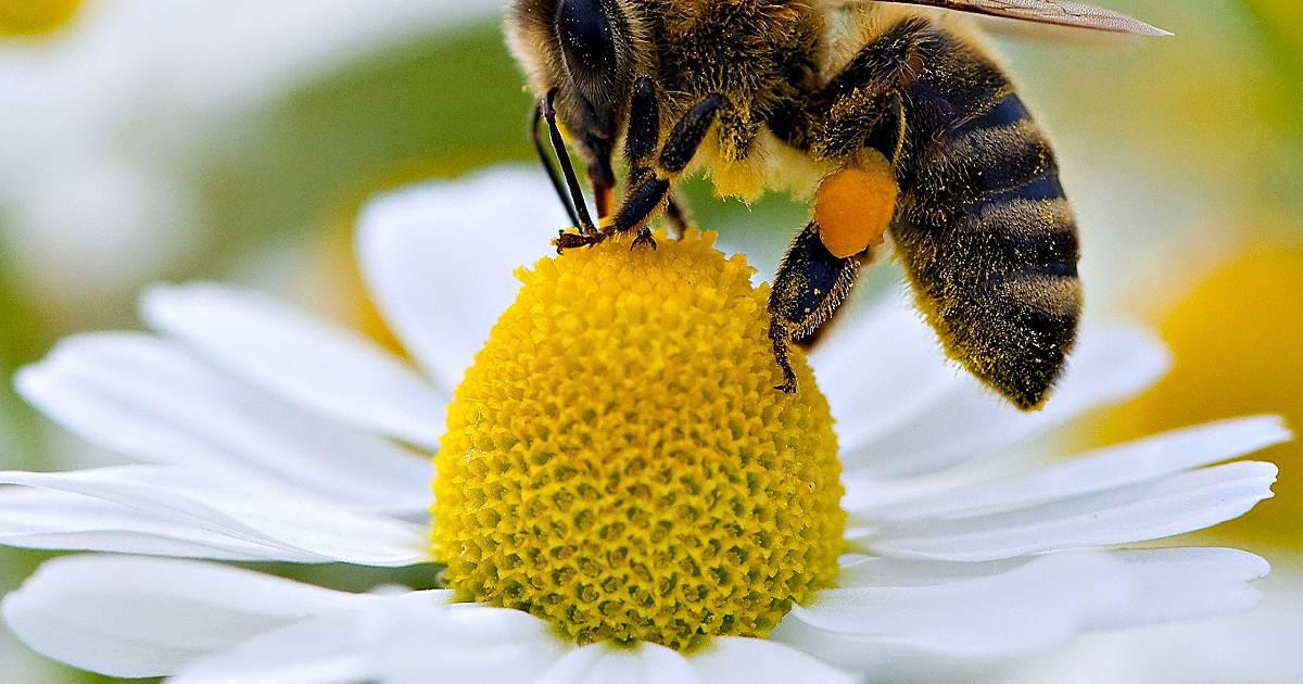Nach Ausbruch der Faulbrut in Rheinberg weisen Bienenzüchter auf Gefahr hin