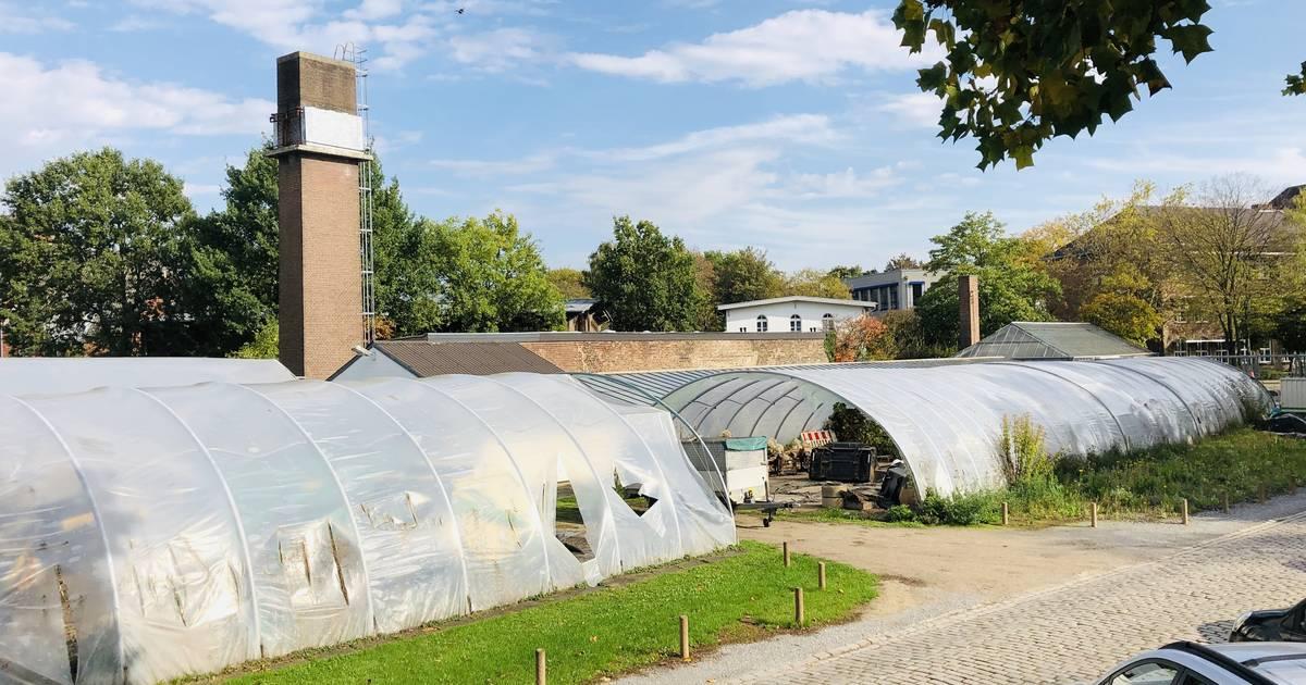 Neuss: Förderverein bangt um altes Gewächshaus im Botanischen Garten