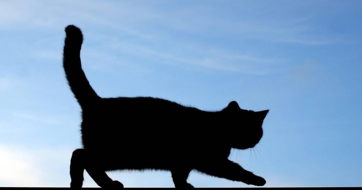 FDP-Antrag zur Kastrations- und Kennzeichnungspflicht für Katzen in Viersen