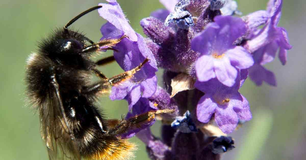 Stadt lässt zum Insektenschutz 9000 Blumenzwiebeln setzen