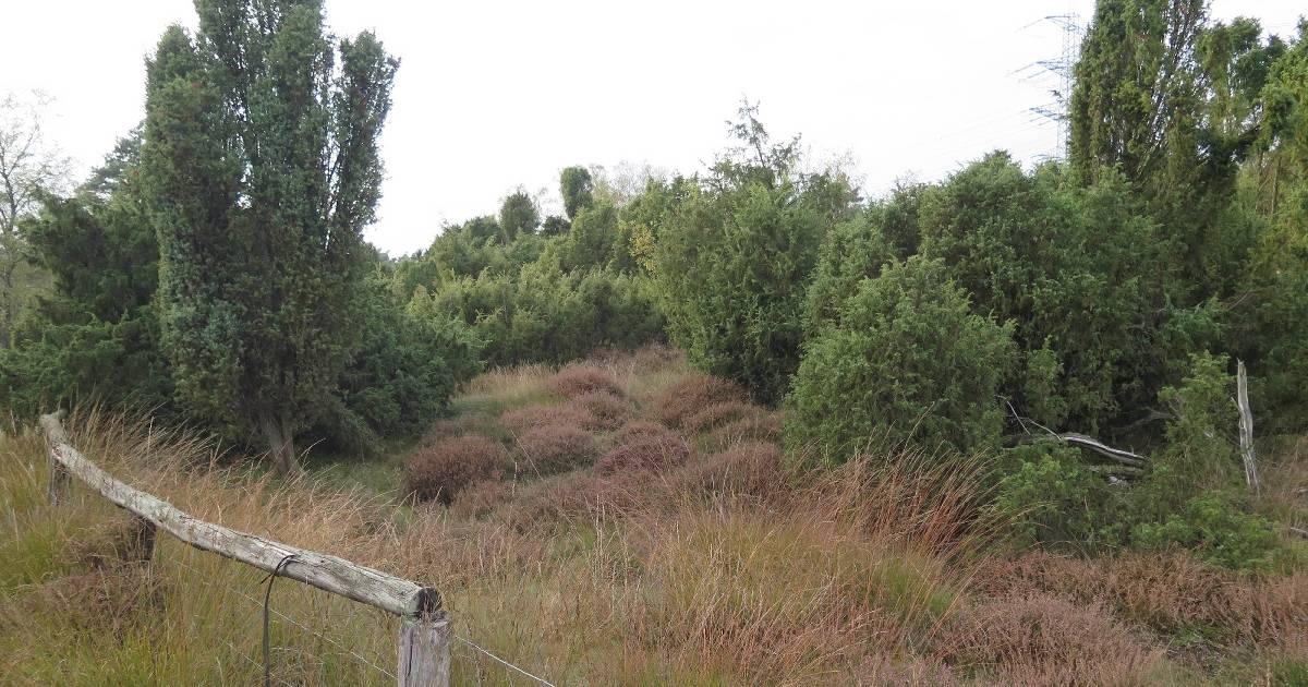 Schermbeck: Naturschutzgebiet Loosenberge wird 80 Jahre alt