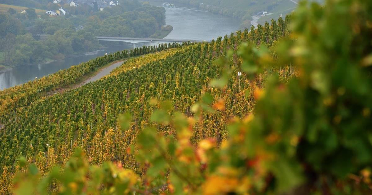 US-Strafzölle auf EU-Importe treten in Kraft - Käse, Wein, Olivenöl