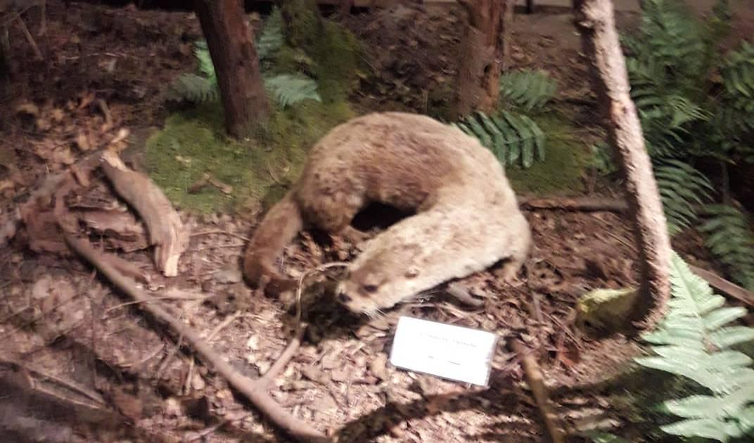 Neue Stationen mit Tierstimmen im Museum Mensch und Jagd