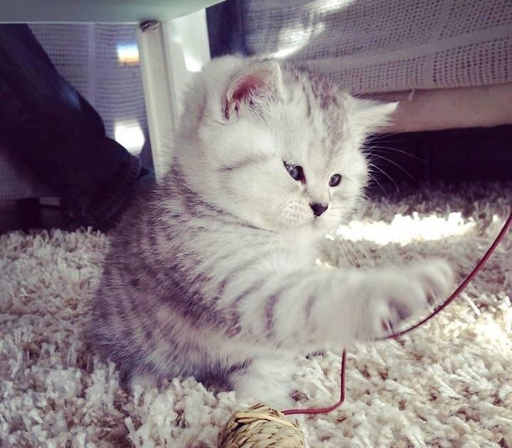 Korschenbroich: Die Katze Lou hat bei Instagram rund 12.000 Abonnenten
