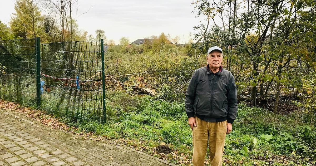 Kahlschlag in Wald: Rentner kämpft gegen die Stadtverwaltung Hamminkeln