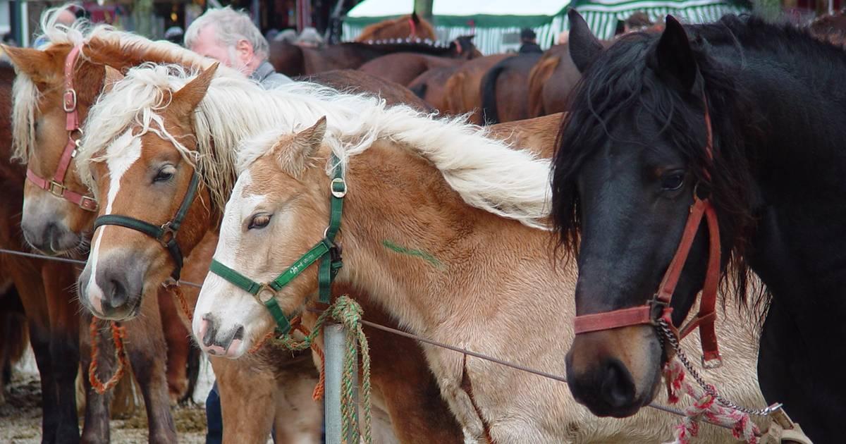 Herne: Diskussion um Ponyreiten beim Cranger Weihnachtszauber