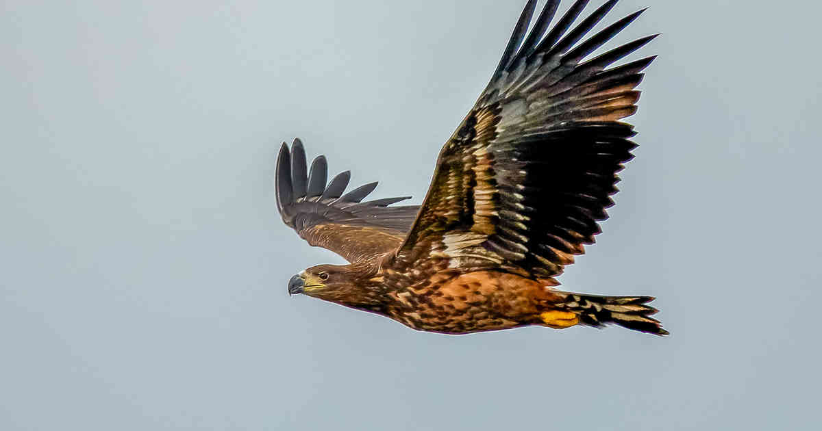 Kamera könnte Windrad in Büderich vor Seeadler in Xanten warnen