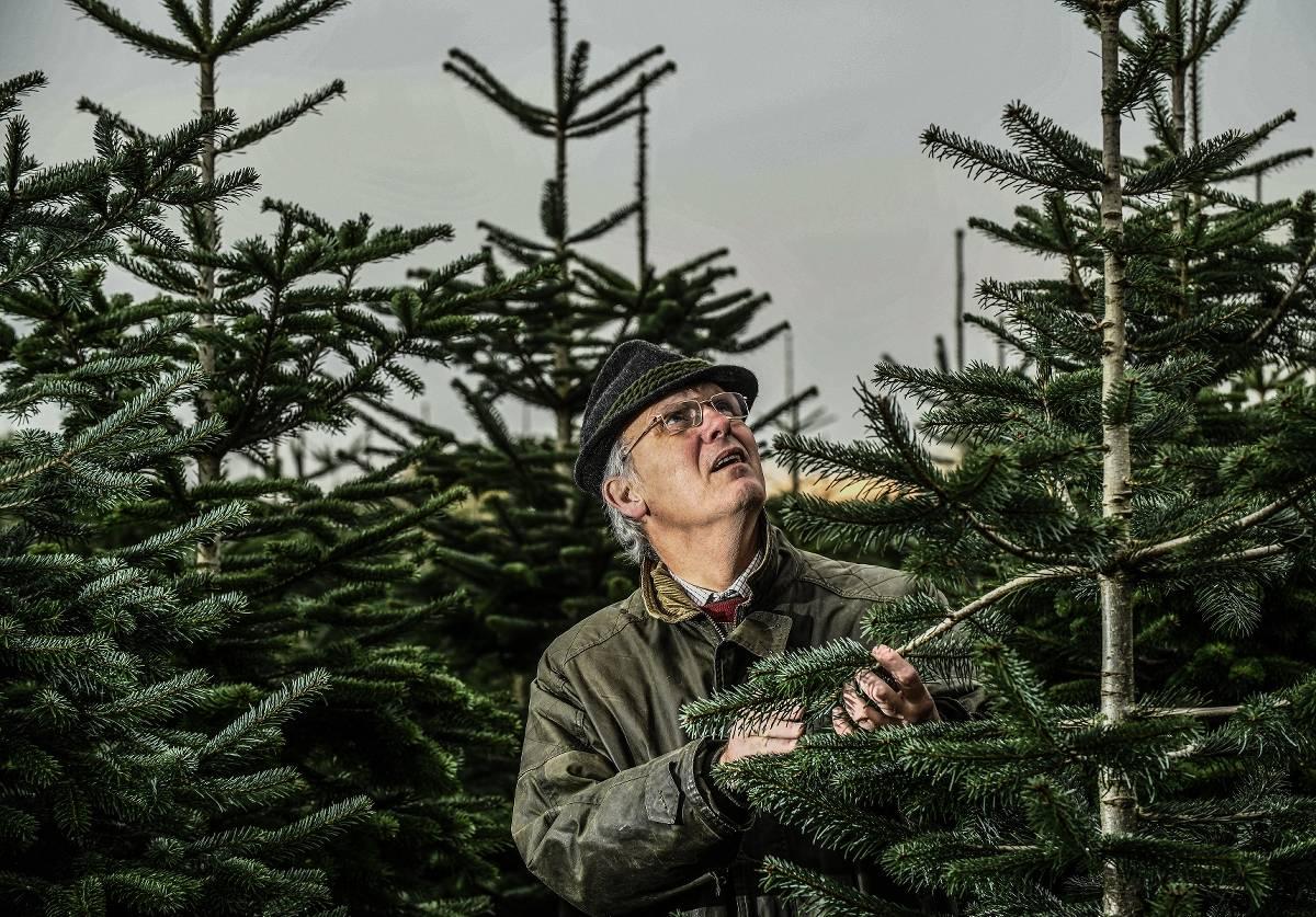 weihnachtsbäume selber schlagen nrw