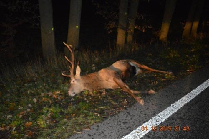 Bei Wildwechsel auf B 58: Hirsch verendet nach Unfall mit Pkw
