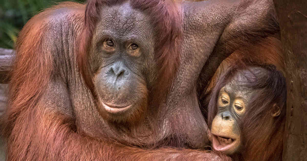 Zoo Krefeld Affen