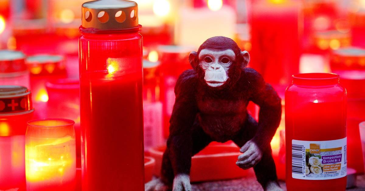 Krefeld: Zoo bekommt 1,4 Millionen Euro Spenden nach Affenhaus-Brand
