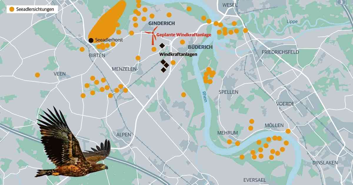Seeadler könnte weitere Windräder bei Wesel-Büderich bremsen