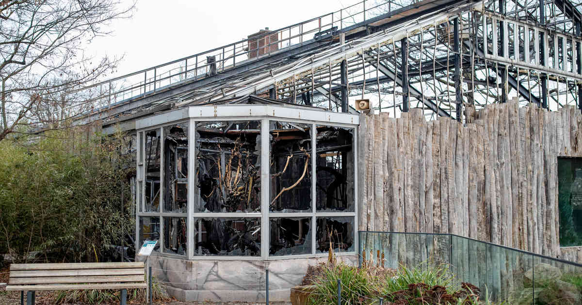 Zoo Krefeld: Nach Brand - Bau von neuem Affenhaus beschlossen
