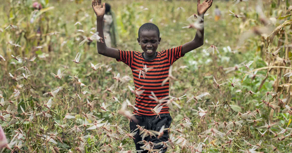 Plage: Milliarden Heuschrecken fallen über Afrika her