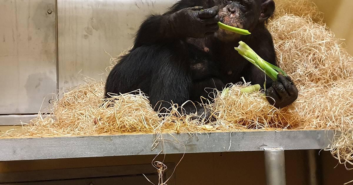 Brand im Affenhaus im Zoo Krefeld: Ein Protokoll großer Gefühle