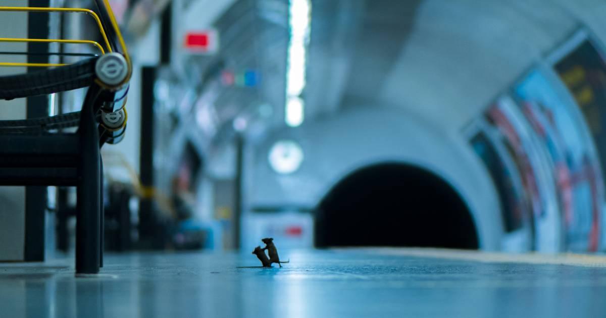 Publikumspreis für Foto: Hier kämpfen zwei Mäuse um einen Krümel