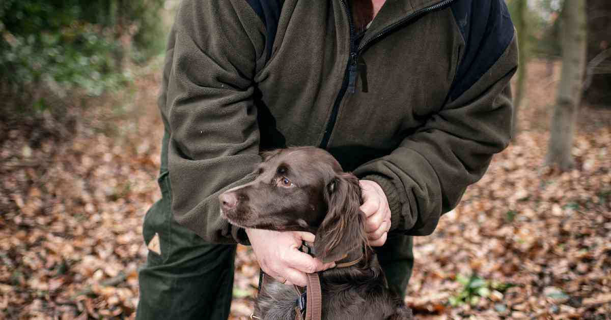 Hegering: Jagdhund Tessa ist immer mit auf der Pirsch