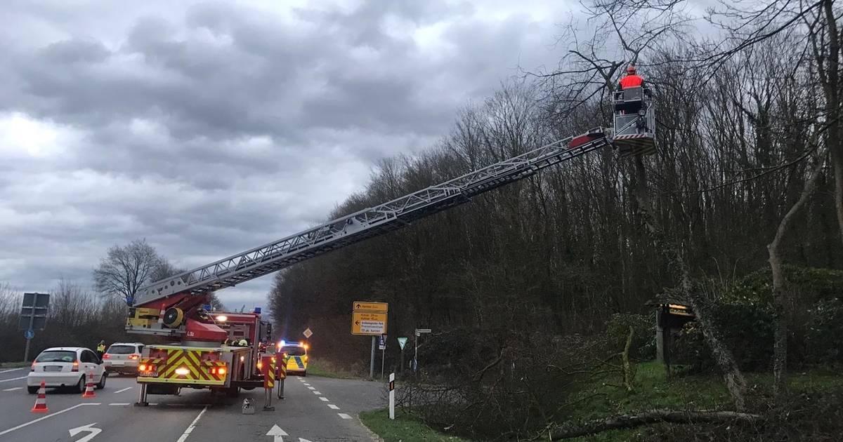 """Sturmtief """"Victoria"""" in Xanten: Baum stürzt teilweise auf die Fahrbahn"""