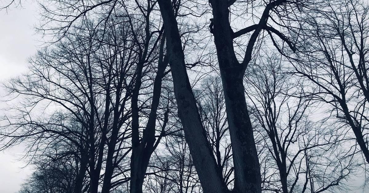 Sturmwarnung: Tulpensonntagszug in Bedburg-Hau ist abgesagt
