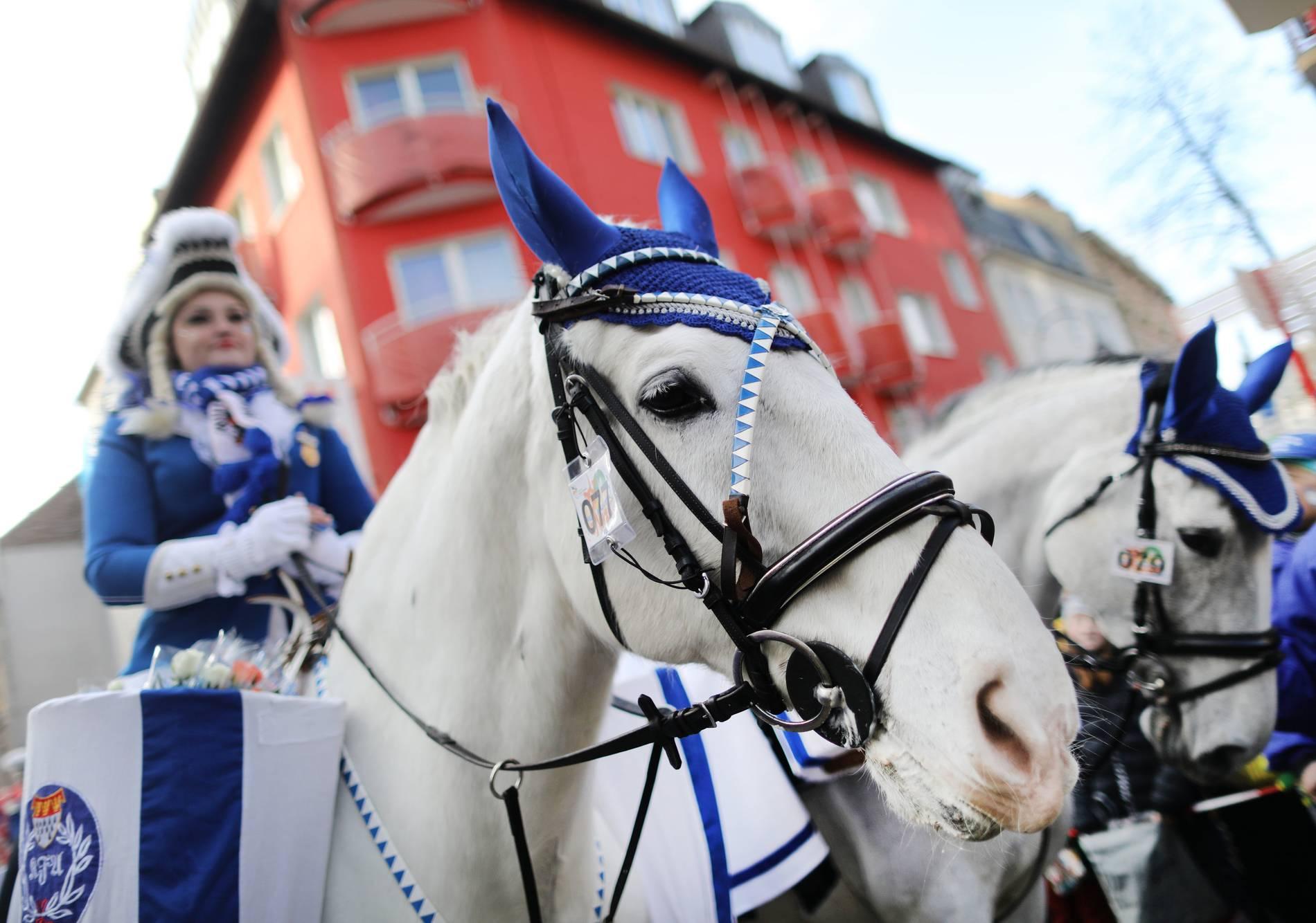 Rosenmontagszug Köln Pferd