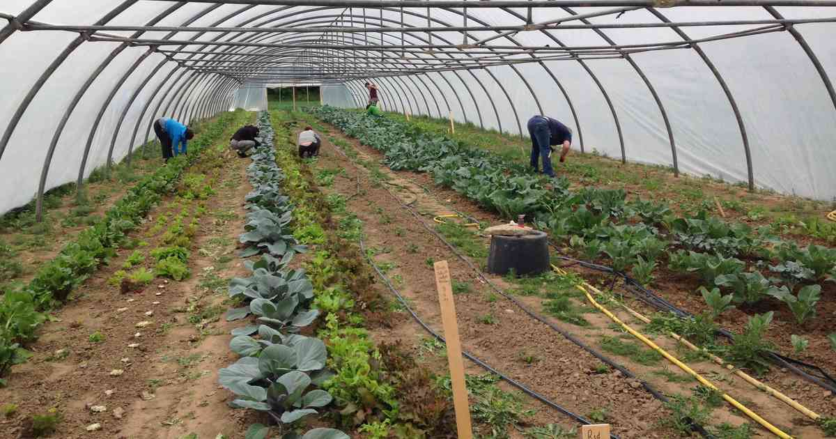 Anbaugemeinschaft Solawi in Rheinberg: Solidarischer Bio-Garten geht ins Jahr vier
