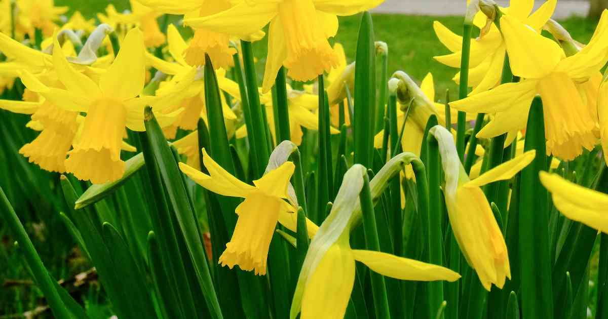 Schicken Sie uns ein Foto!: Wie schön ist ihr Frühlingsgarten?