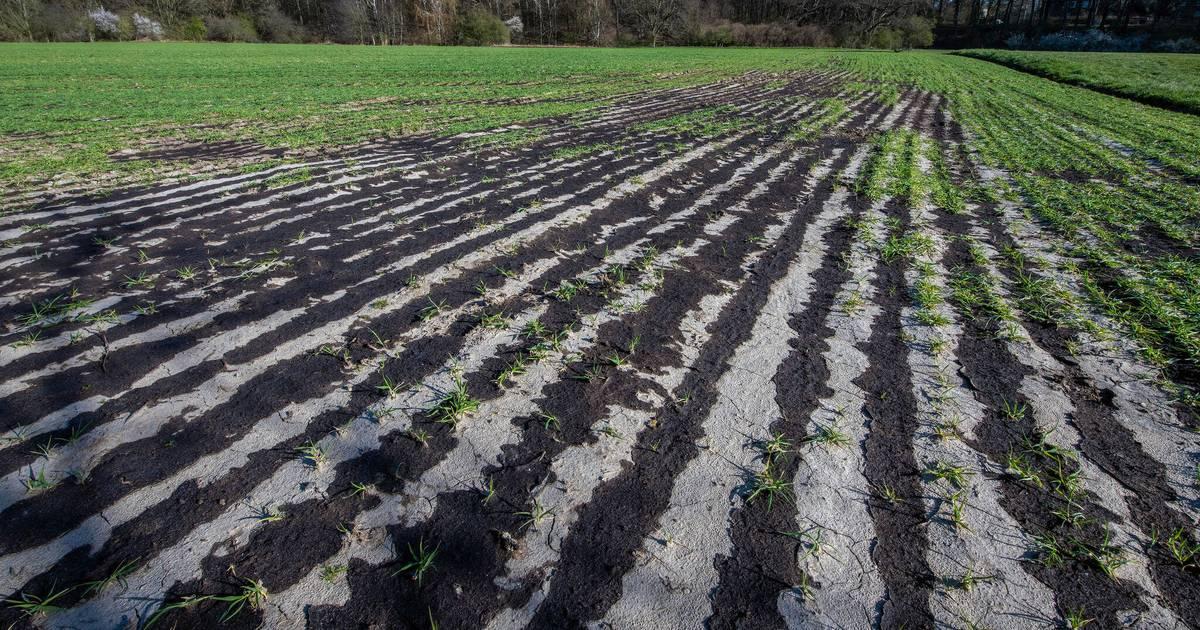 Landwirte aufgebracht: Güllekritik: Kreisbauer schließt Belastung aus