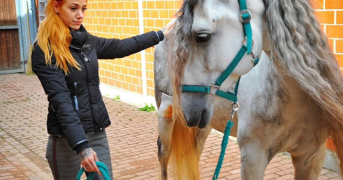 Polizei ermittelt: Pferderipper verletzt erneut ein Tier in Mönchengladbach