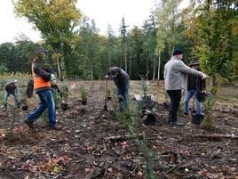 Pflanzaktion am Hohen Busch in Viersen : 275 neue Bäume für Süchtelner Höhen