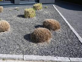 Klimaschutz vor der Haustür: Versiegelung von Sonsbecks Vorgärten löst Debatte aus